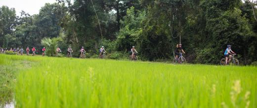Cyclists passing a paddy field